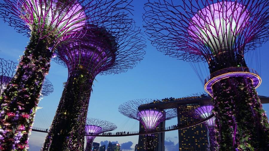 interim manager singapur